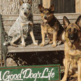 a-good-dogs-life