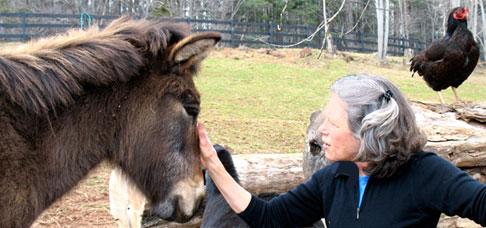 cindy-donkey